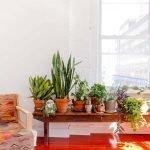 Чтоделать скомнатными растениями перед зимой